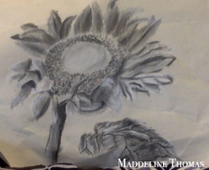 Charcoal- Flowers
